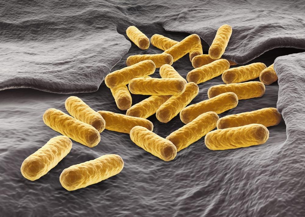 e coli fertőzés vizeletben)