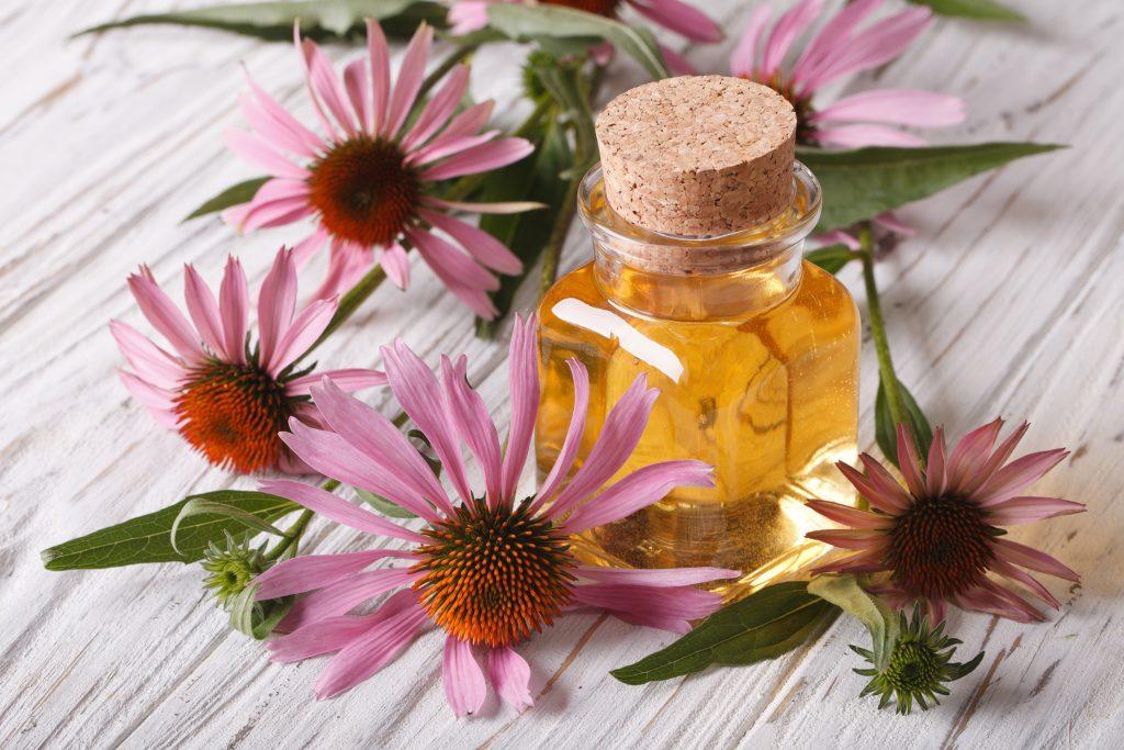 természetes-antibiotikum-kasvirág