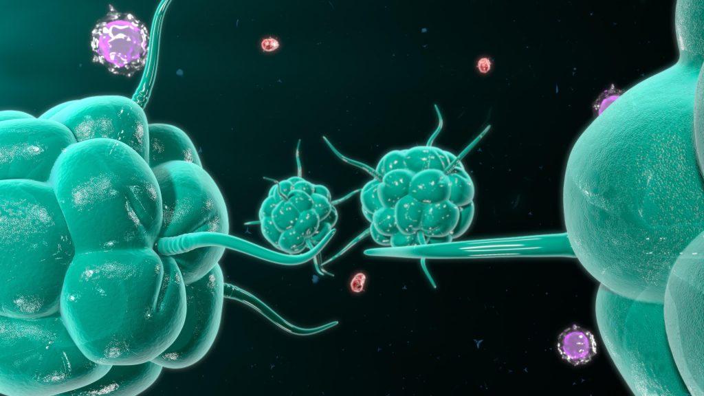 az immunrendszer küzdelme a baktériumokkal